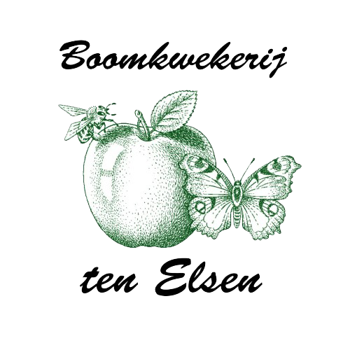 ten elsen logo